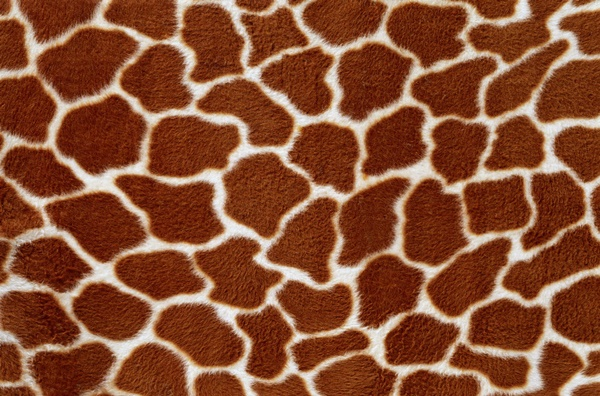 beautiful-illustrations-of-animal-patterns-7
