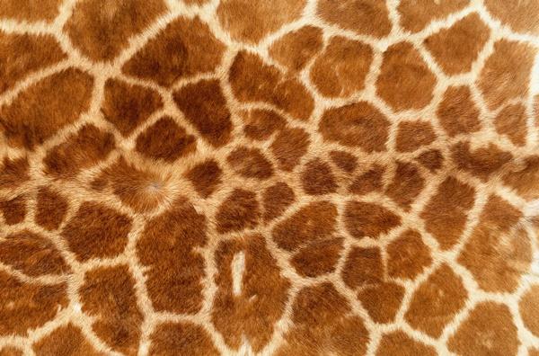 beautiful-illustrations-of-animal-patterns-9