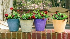choosing small plant pot containers feature image