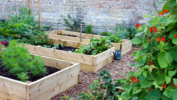 Things To Always Remember While Planning For A Home Garden00010
