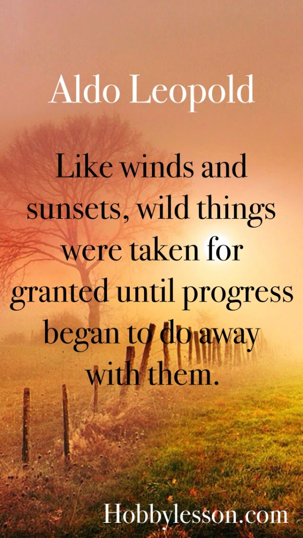 Inspirational Sunset Quotes