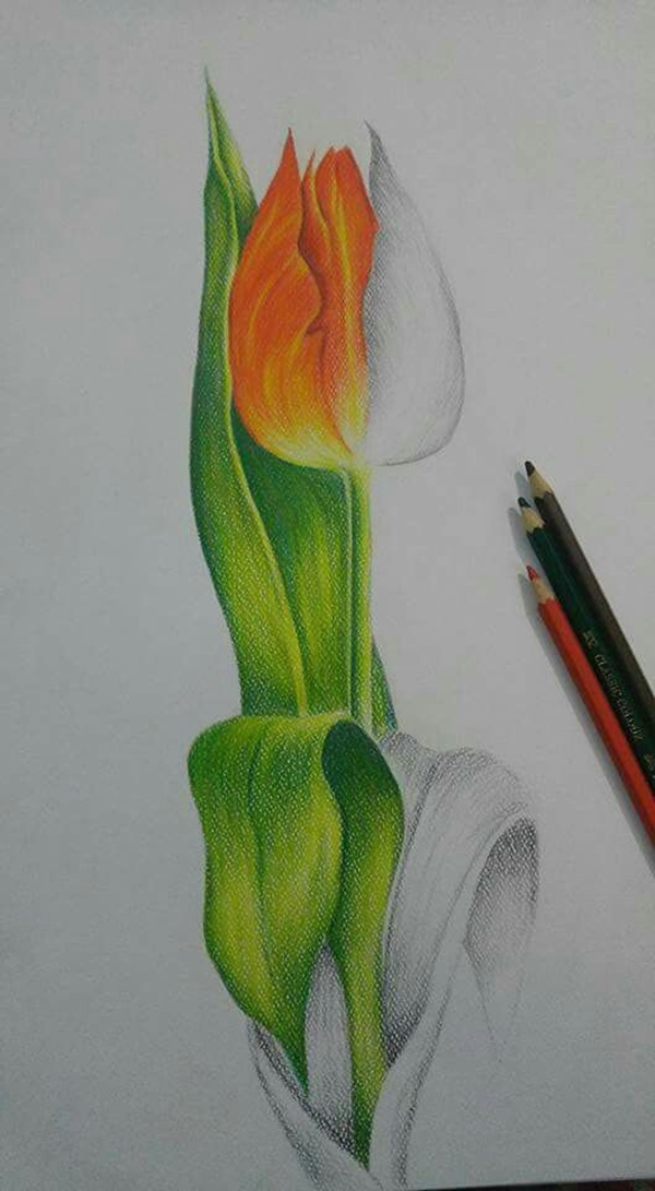 Speaking Colored Pencil Drawings