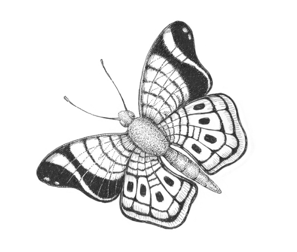 Beautiful Simple Butterfly Drawings In Pencil